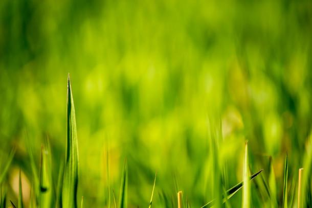 Verde-erba-campi-Wallpaper-356