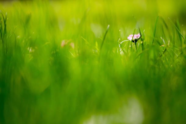 Verde-erba-campi-Wallpaper-210