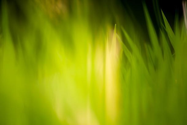 Verde-erba-campi-Wallpaper-291