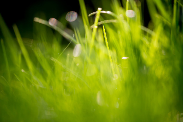 Verde-erba-campi-Wallpaper-295