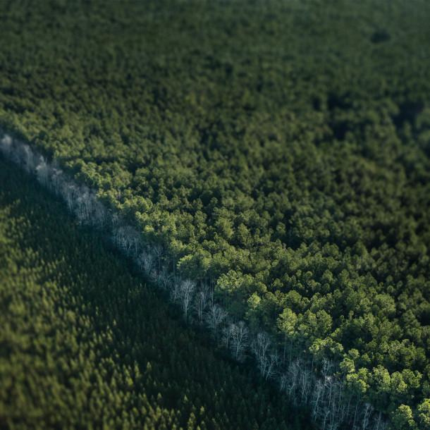 Fattoria degli alberi