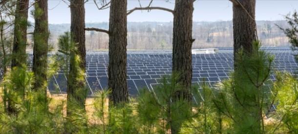 solare-alberi