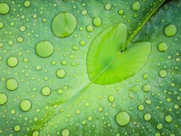 gocce d'acqua-on-foglie