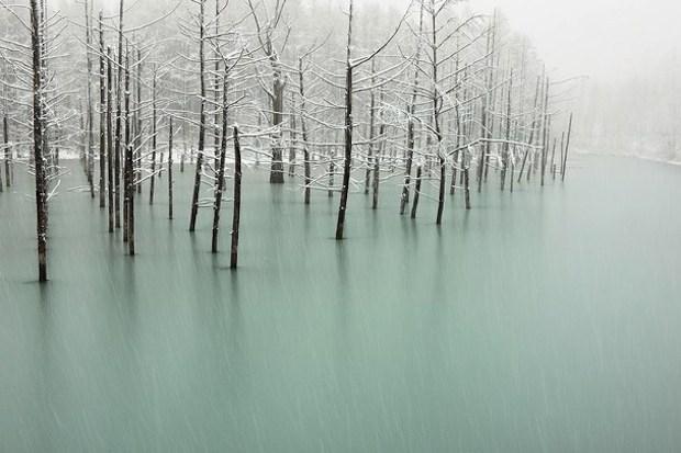 stagno della neve della carta da parati del Giappone