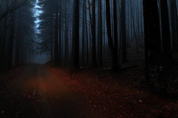 foresta di notte wallpaper
