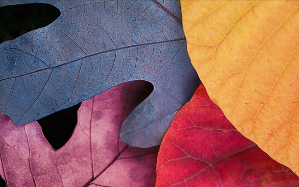 Autunno-foglie-overview_retina_large_2x