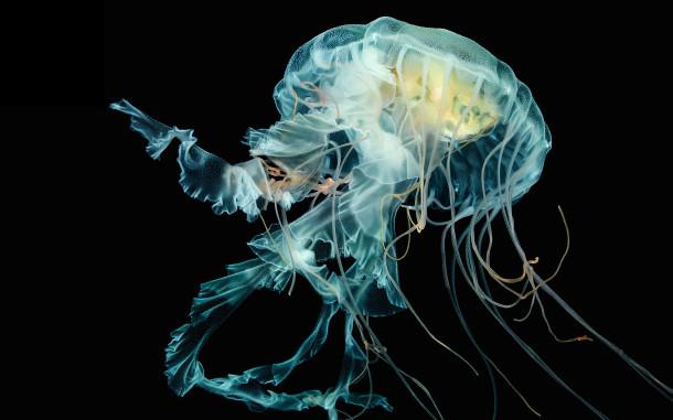 meduse-wallpaper-da-via cavo-apple-watch-articolo