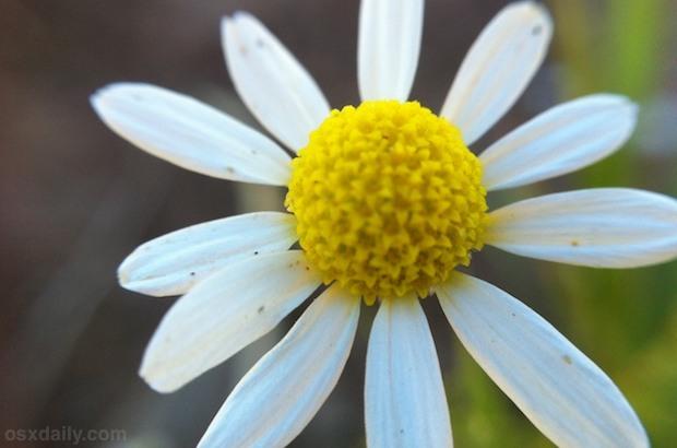 iPhone Macro Foto di un fiore