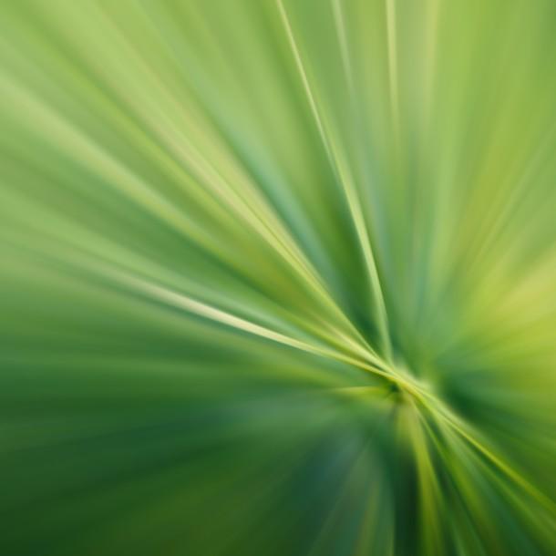 offuscata-erba