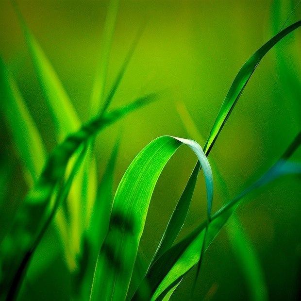 Fili d'erba verde