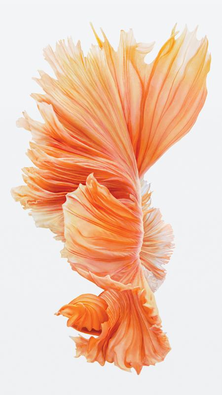 iPhone-6s-Fish-rosa-Wallpaper