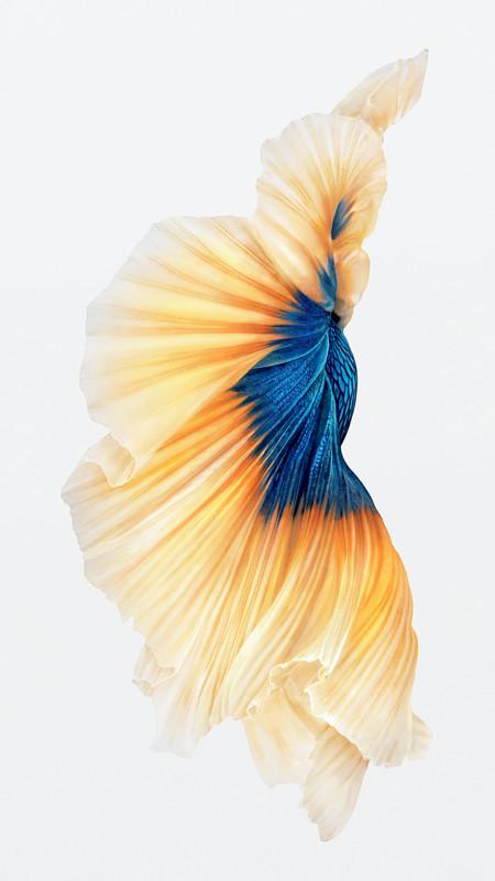 iPhone-6s-Fish-oro-carta da parati