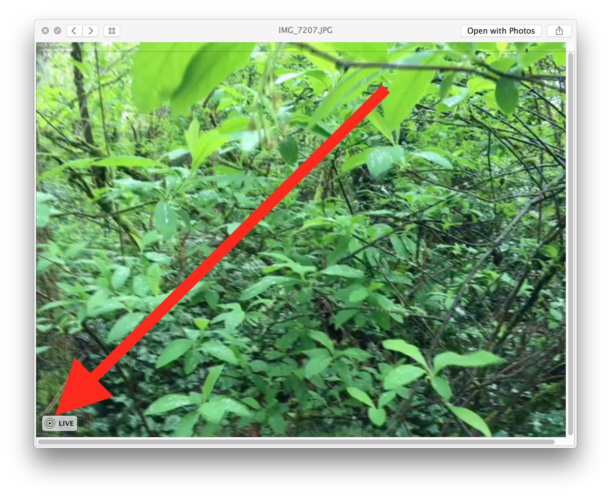 Riproduzione di una foto dal vivo in Messaggi per mac